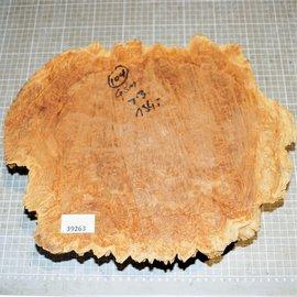 Goldfield burl approx. 350 x 270 x 65 mm, 4,6 kg
