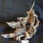 Mopane Wurzel - Skulptur, ca. 70 x 40 x 26 cm, 91537