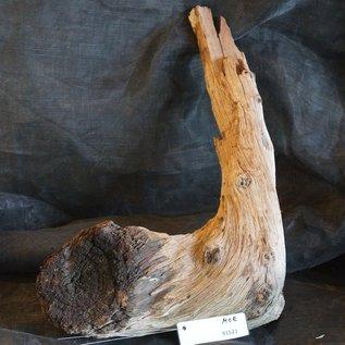 Mopane Wurzel - Skulptur, ca. 55 x 35 x 20 cm, 91521