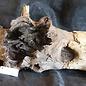 Mopane Wurzel - Skulptur, ca. 160 x 45 x 50 cm, 91553