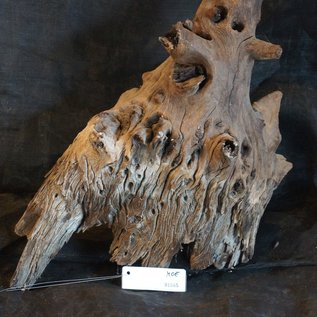 Mopane Wurzel - Skulptur, ca. 65 x 35 x 30 cm, 91565