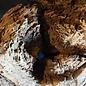 Kameldorn Wurzel - Skulptur, ca. 50 x 40 x 30 cm, 91588