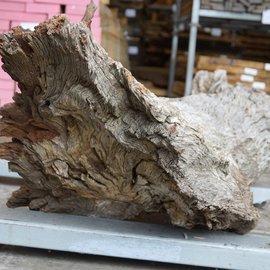Kameldorn Wurzel - Skulptur, ca. 200 x 58 x 44 cm, 91591