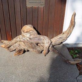 Mopane Wurzel - Skulptur, ca. 150 x 55 x 40 cm, 91612