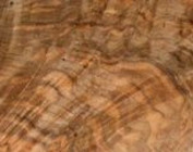 Common walnut burl
