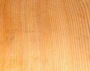 Libanon Cedar