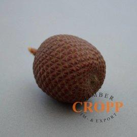 Laranja Nuss, Buriti Frucht