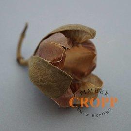 Rosa Tefte Blüte