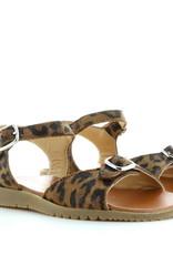 Gallucci 455 jaguar
