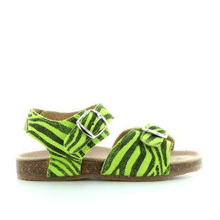 920 tigre verde