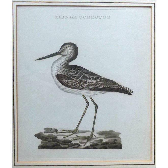 Collectie Gouldmaps - Witgat snip ; C. Nozeman - Tringa Ochropus.- 1809