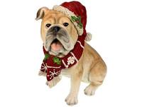 Meander Mopshond met Kerstmuts