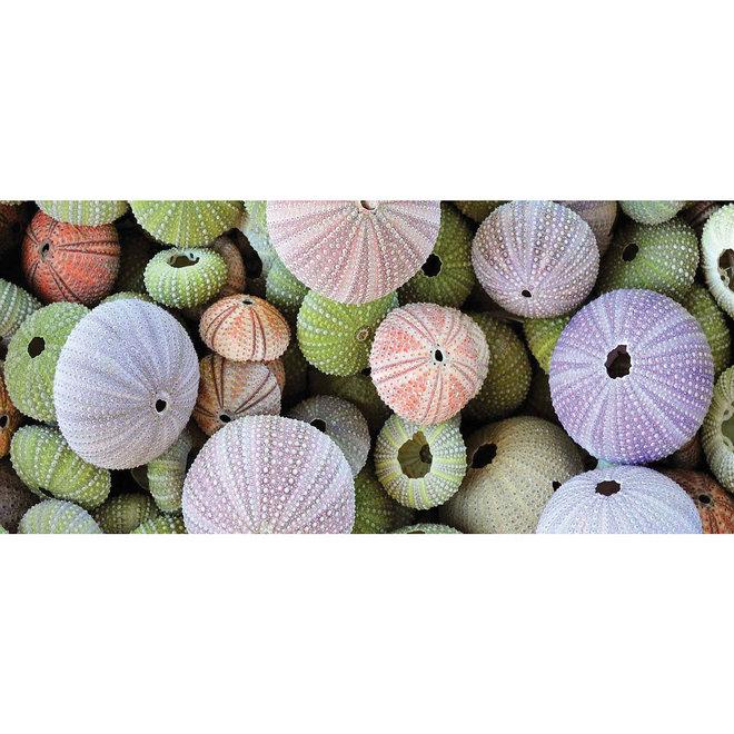 Wanddecoratie Sea Urchin 36x54