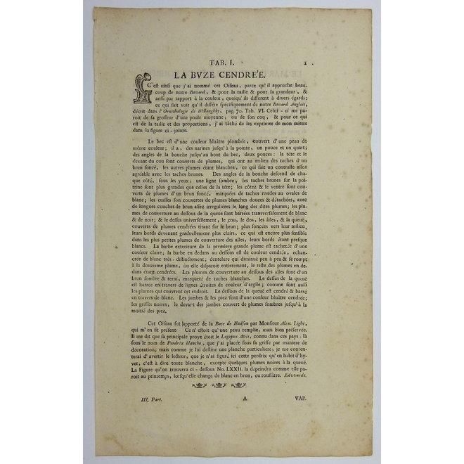Collectie Gouldmaps - Buizerd; G. Edwards / J. Seligmann - Buteo cinereus. - 1770