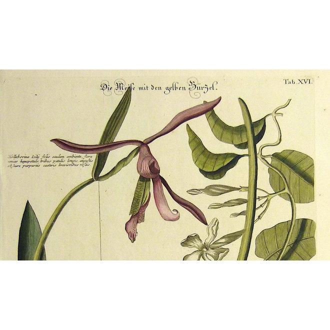 Collectie Gouldmaps - Geelbuik mees; M. Catesby / J. Seligmann - Parus uropygeo luteo. - 1770