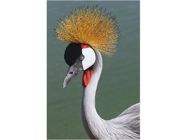 Mondi-Art Alu Art Crowned Crane 50x100