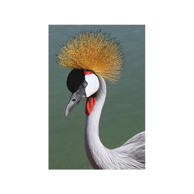 Alu Art Crowned Crane 50x100