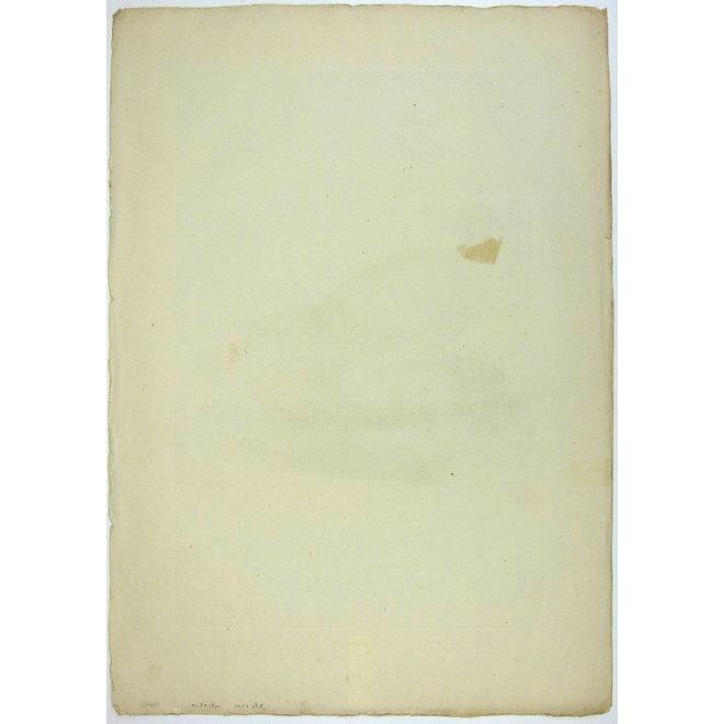 Collectie Gouldmaps - Holenduif; C. Nozeman - Oenas Vinago Livia - 1770