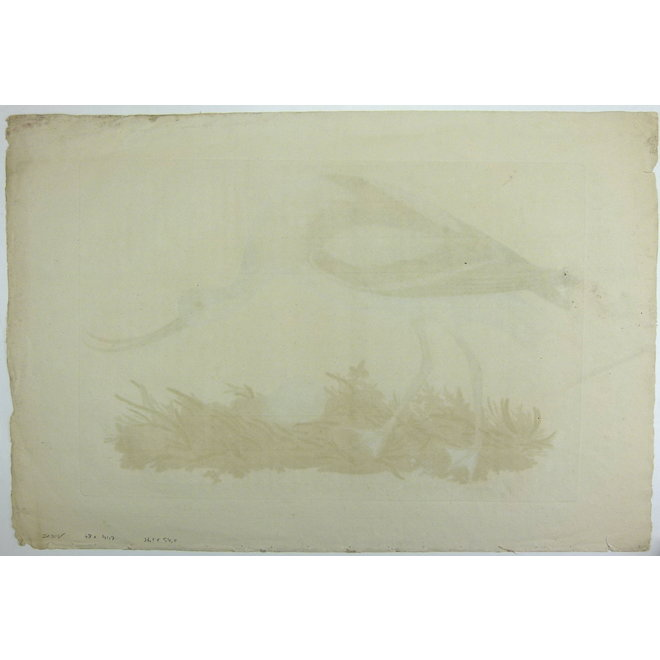 Collectie Gouldmaps - Kluut; C. Nozeman - Recurvirostra - 1770