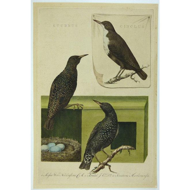 Collectie Gouldmaps - Spreeuwen en waterspreeuw ; C. Nozeman - Sturnus et Cinclus - 1770