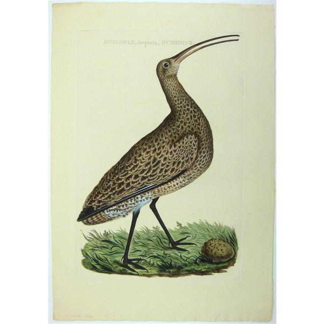 Collectie Gouldmaps - Wulp; C. Nozeman - Scolopax (..) - 1789