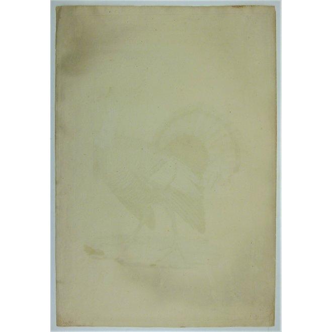 Kalkoen; C. Nozeman - Meleagris Gallopavo. - 1829