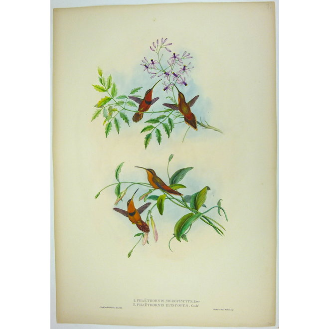 Collectie Gouldmaps - Belted Hermit and Bishop Hermit - J. Gould - Phaethornis (..) - 1849 ca.