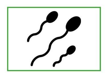 Hormonen & Voortplanting