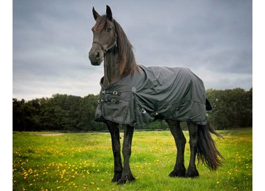 Friesian & Baroque blankets