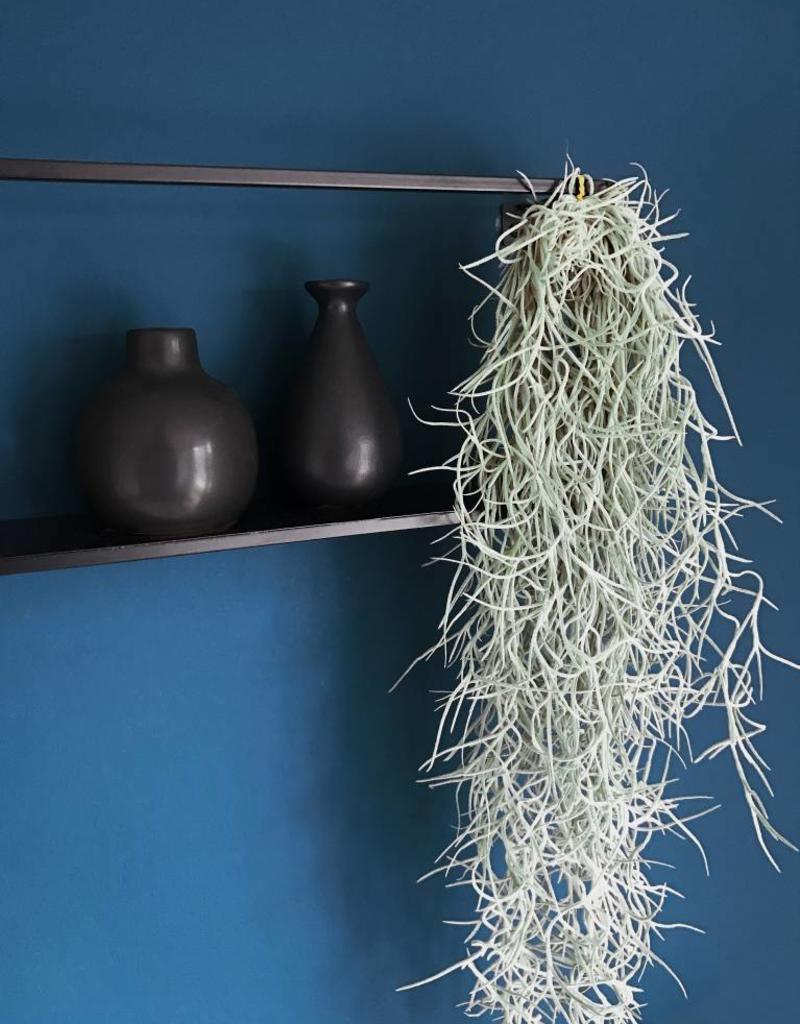 Draadzaken Airplant-Spaanse mos