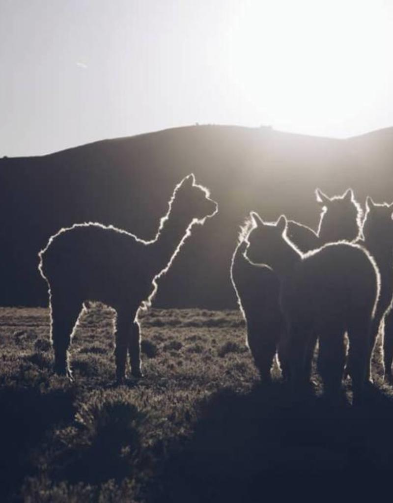 Bufandy Alpaca sjaal Fabian-mouse grey