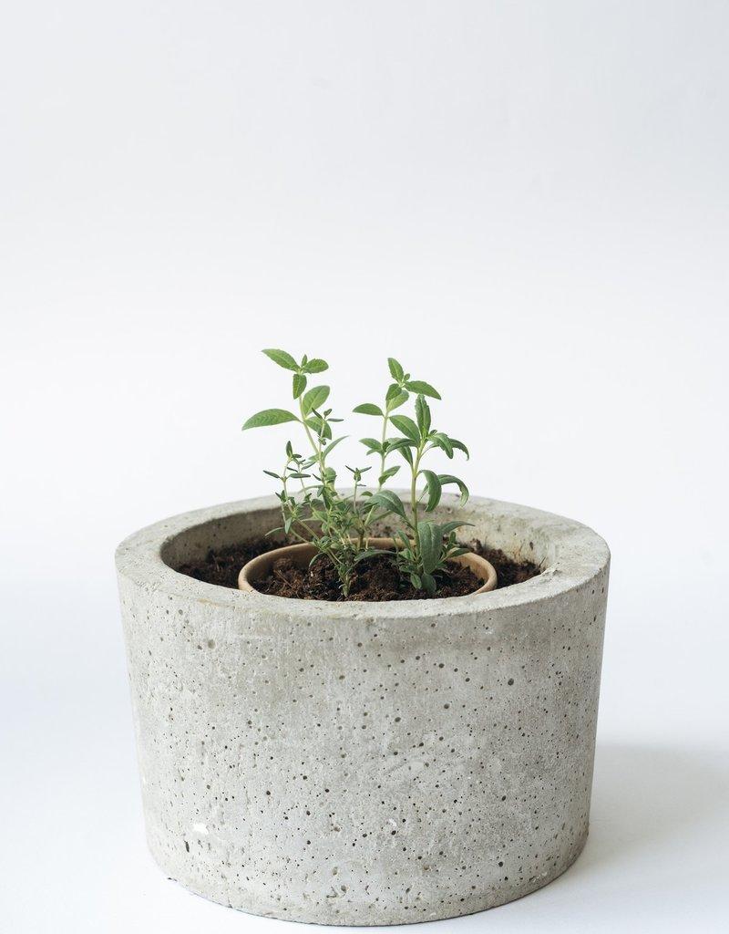 Rhoeco Tea Drink it, Plant it-Mountain