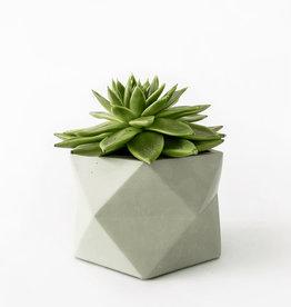 House Raccoon Concrete Pot PALUA Large-olive green