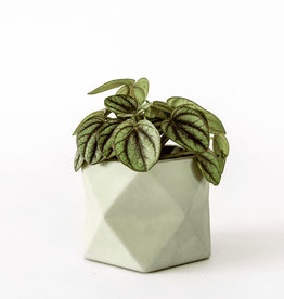House Raccoon Pot PALUA Medium-olive green