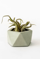 House Raccoon Pot VAND small-olive green