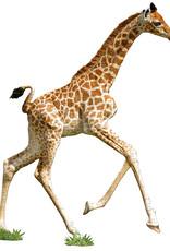 Puzzel I'am Little Giraf 5jaar-100pcs.