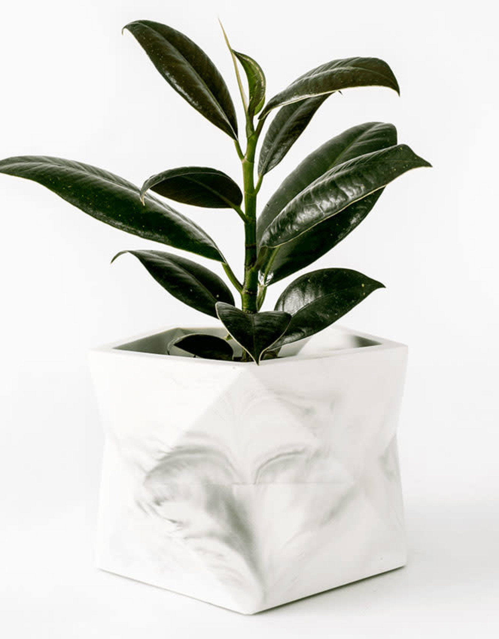 House Raccoon Pot PALUA Large-white marble