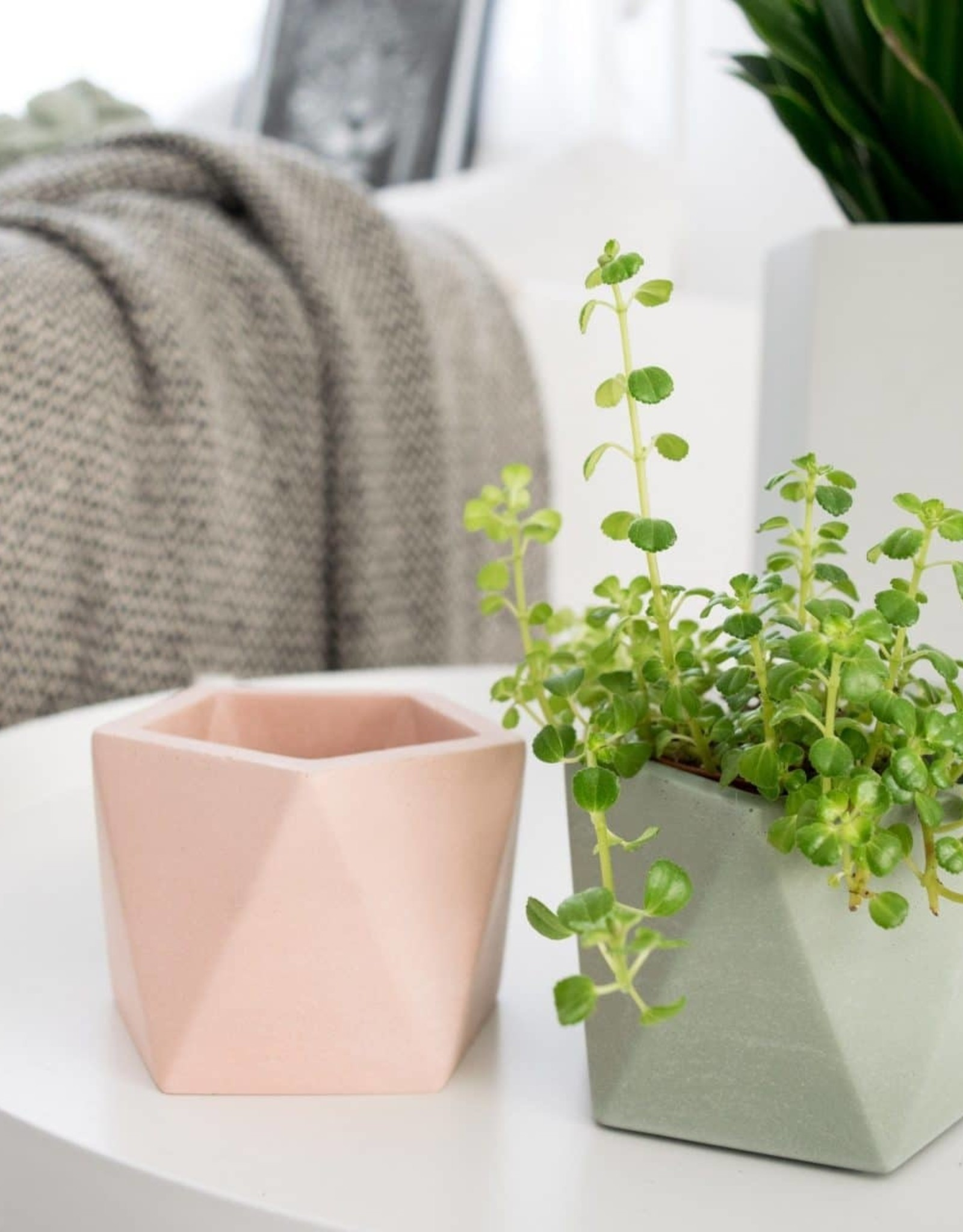 House Raccoon Pot MARE Large-millenial pink