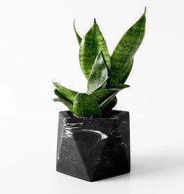 House Raccoon Pot MARE Medium-black marble