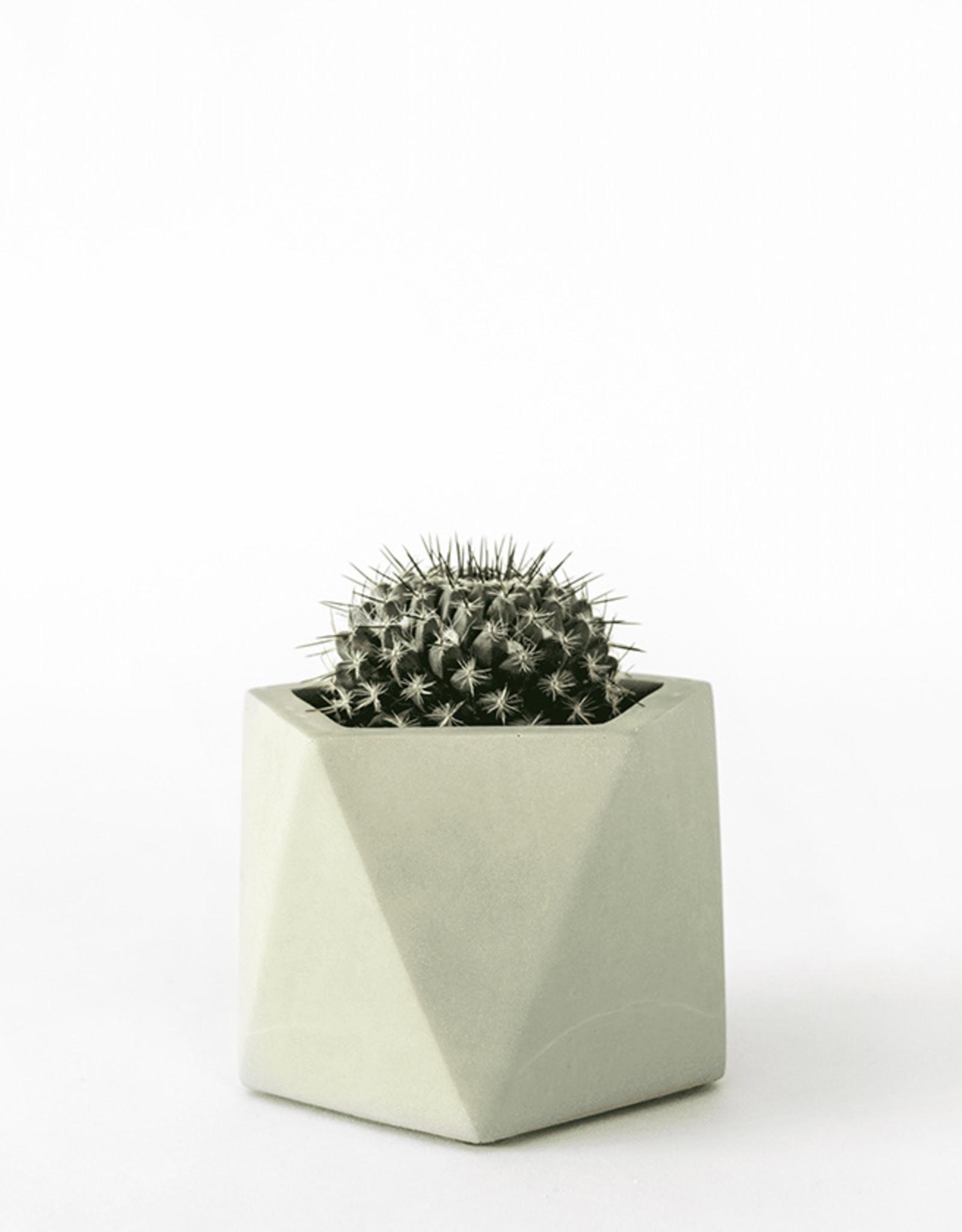 House Raccoon Pot MARE Medium-olive green