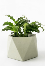 House Raccoon Pot MARE Large-olive green