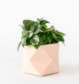 House Raccoon Pot PALUA Medium-millennial pink