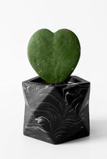 House Raccoon Pot PALUA Medium-black marble