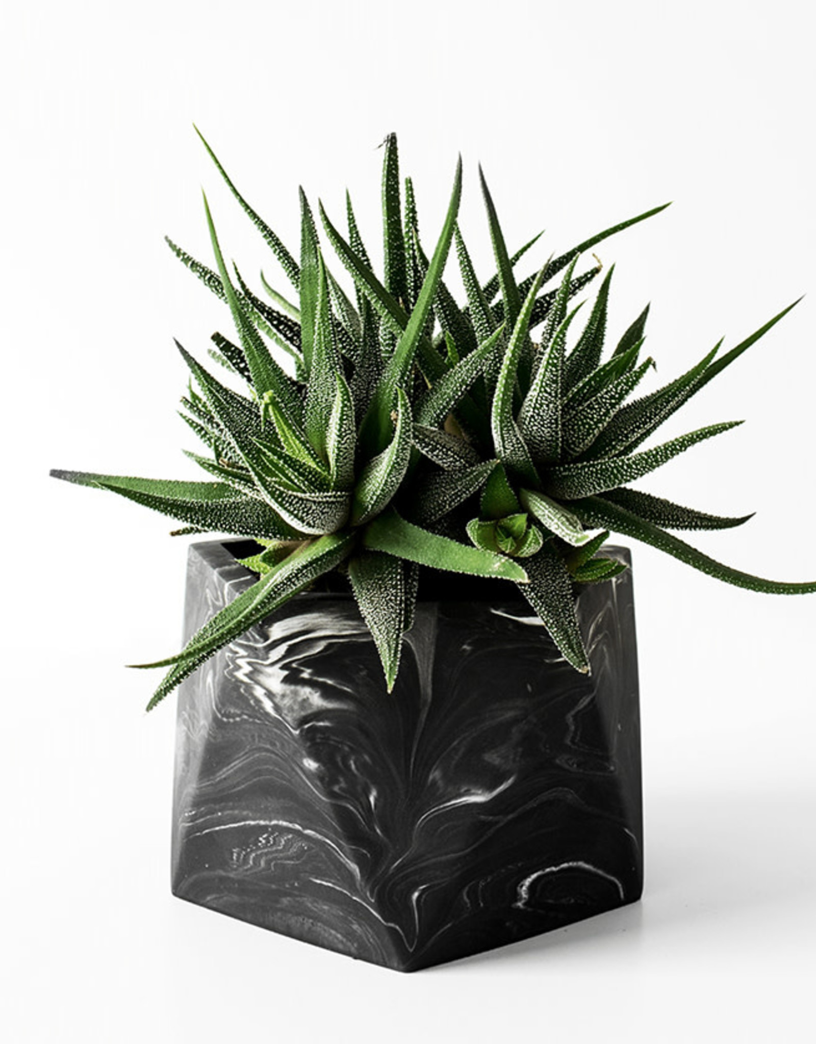 House Raccoon Pot MARE Large-black marble