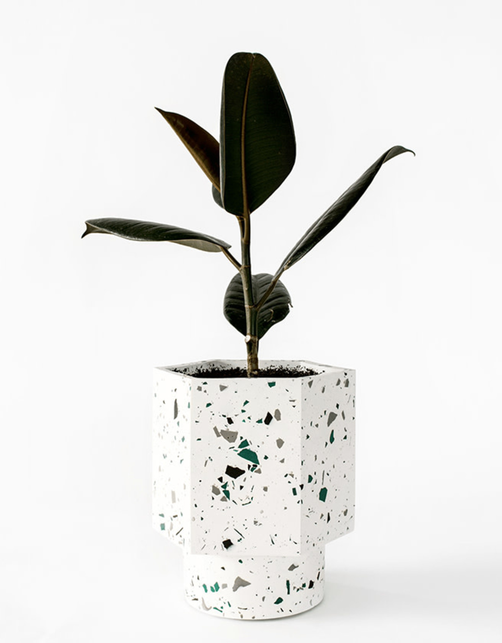 House Raccoon Hapi Self Watering Pot-white emerald