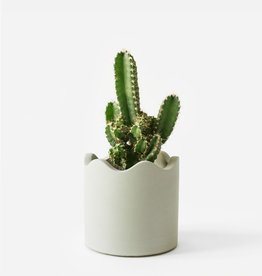 House Raccoon Pot LISA Medium-olive green