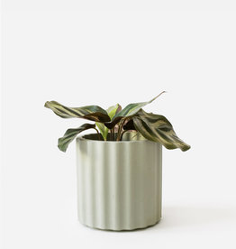 House Raccoon Pot MILA Medium-olive green