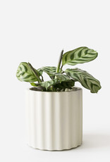 House Raccoon Pot MILA Medium-silver green