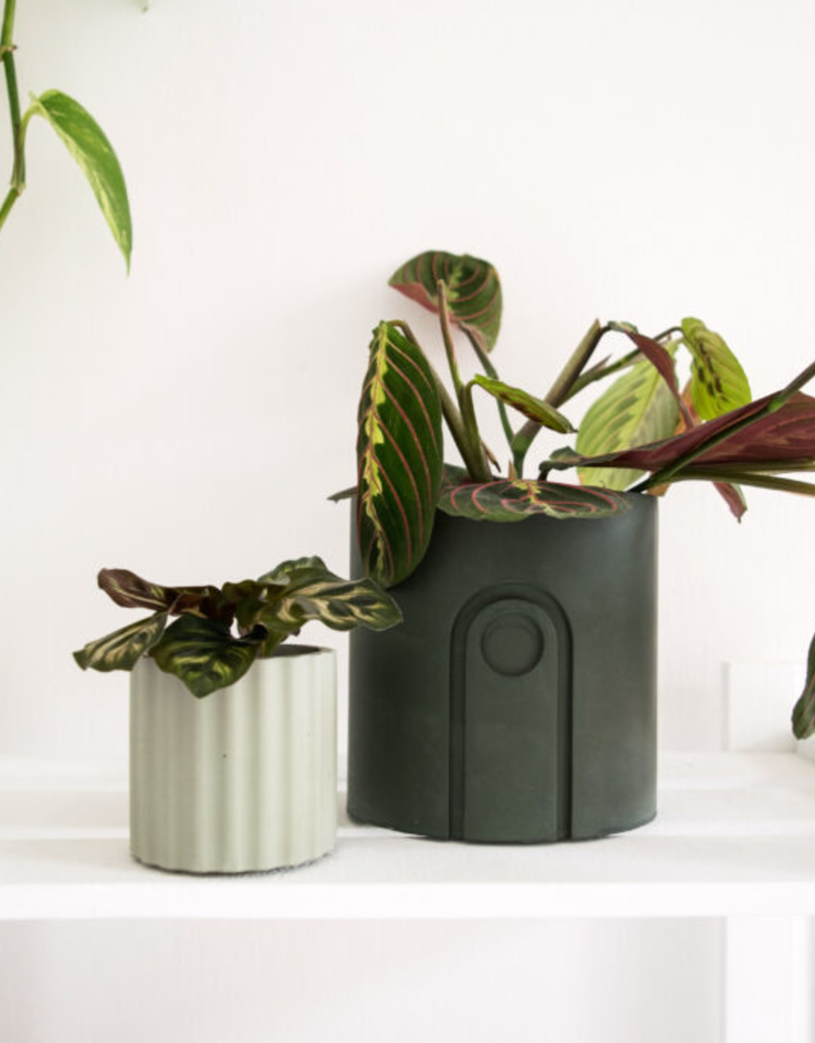 House Raccoon Pot MILA Medium-olive green