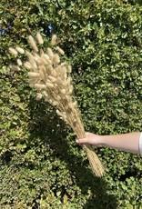 Droogbloemen Lagurus Natural Large-bunny tails (100 g)-